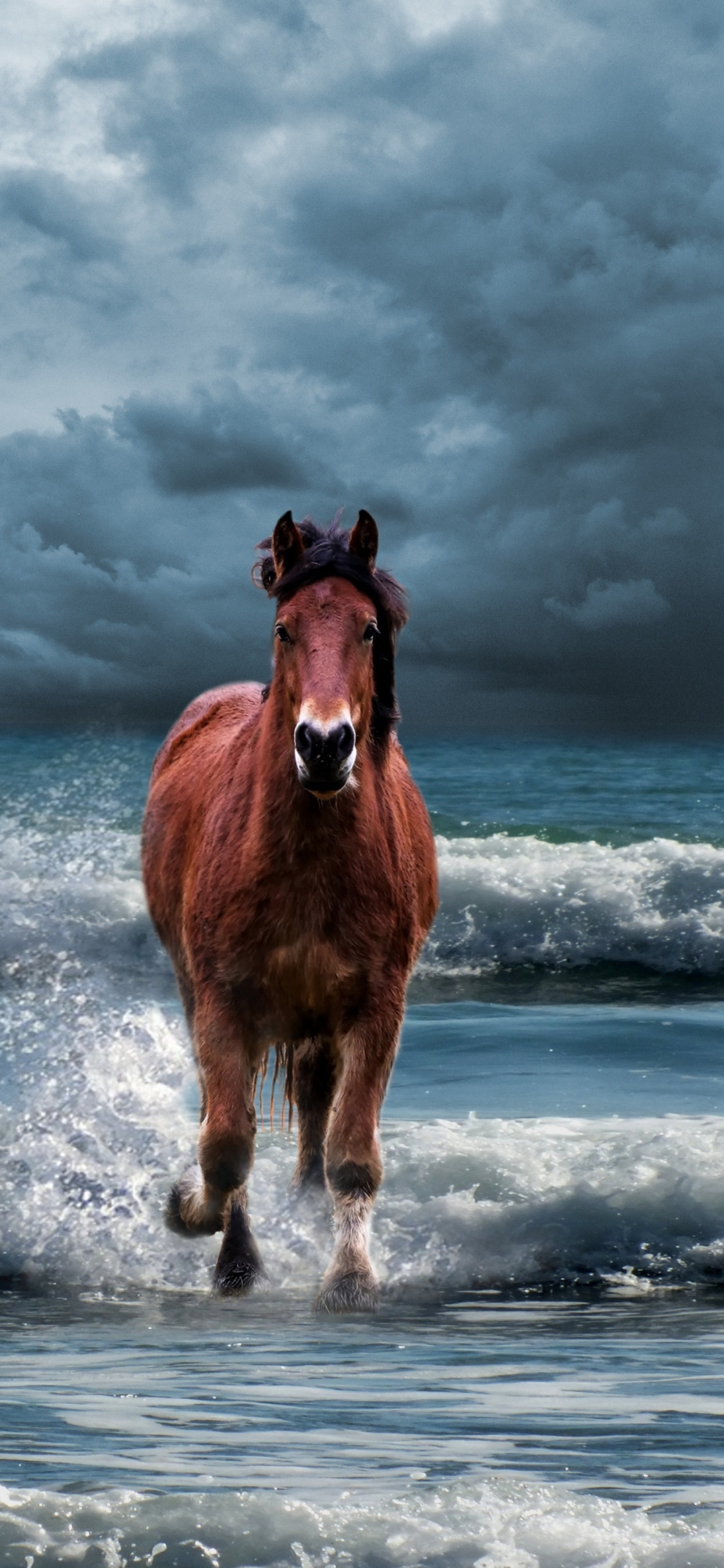 White Horse Running On Beach Wallpapers Posted By Samantha Cunningham