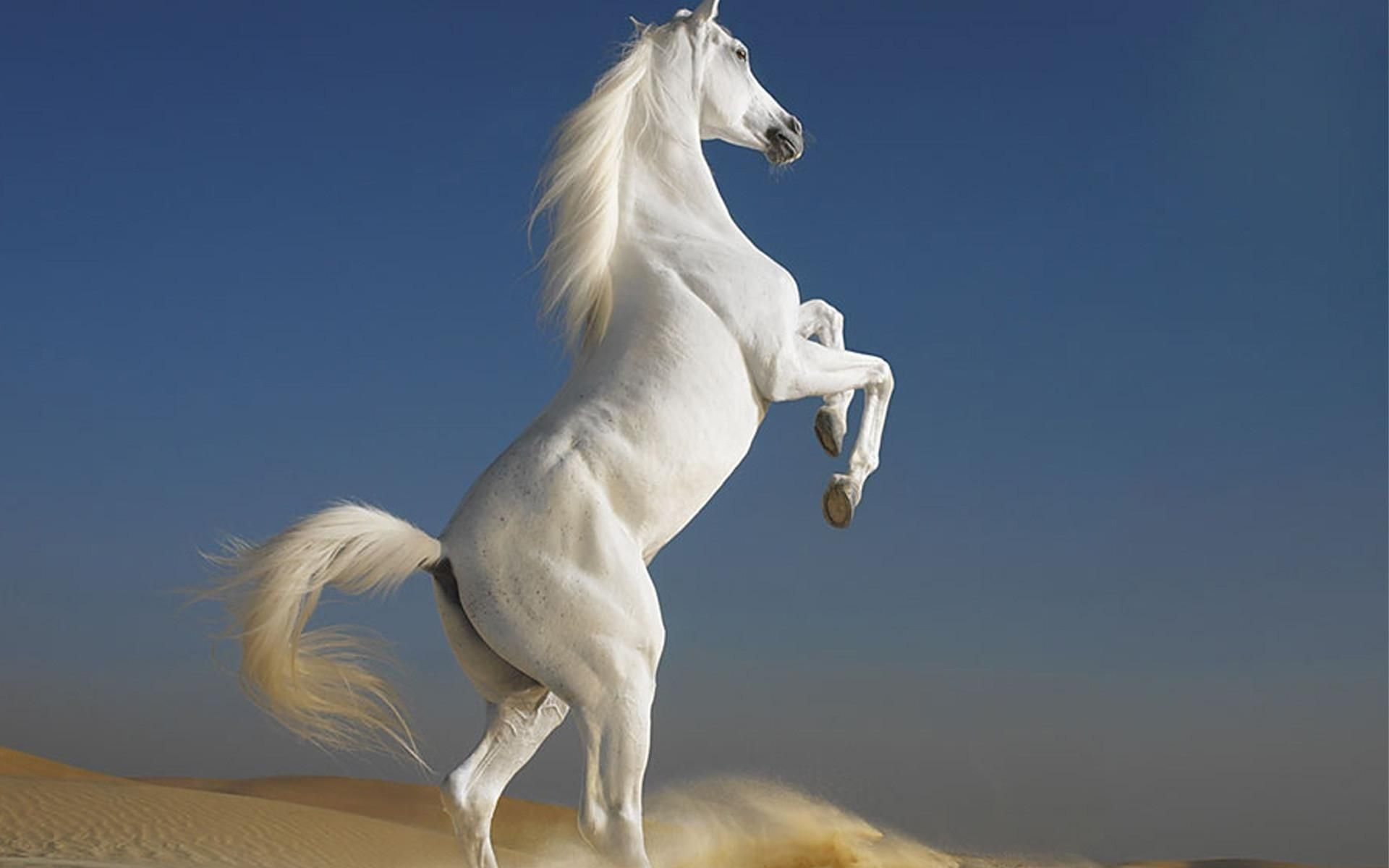 White Horse Wallpaper Posted By Michelle Thompson