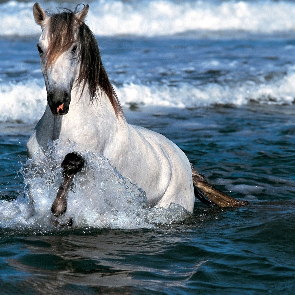 White Horses Running On Beach Posted By Ryan Johnson