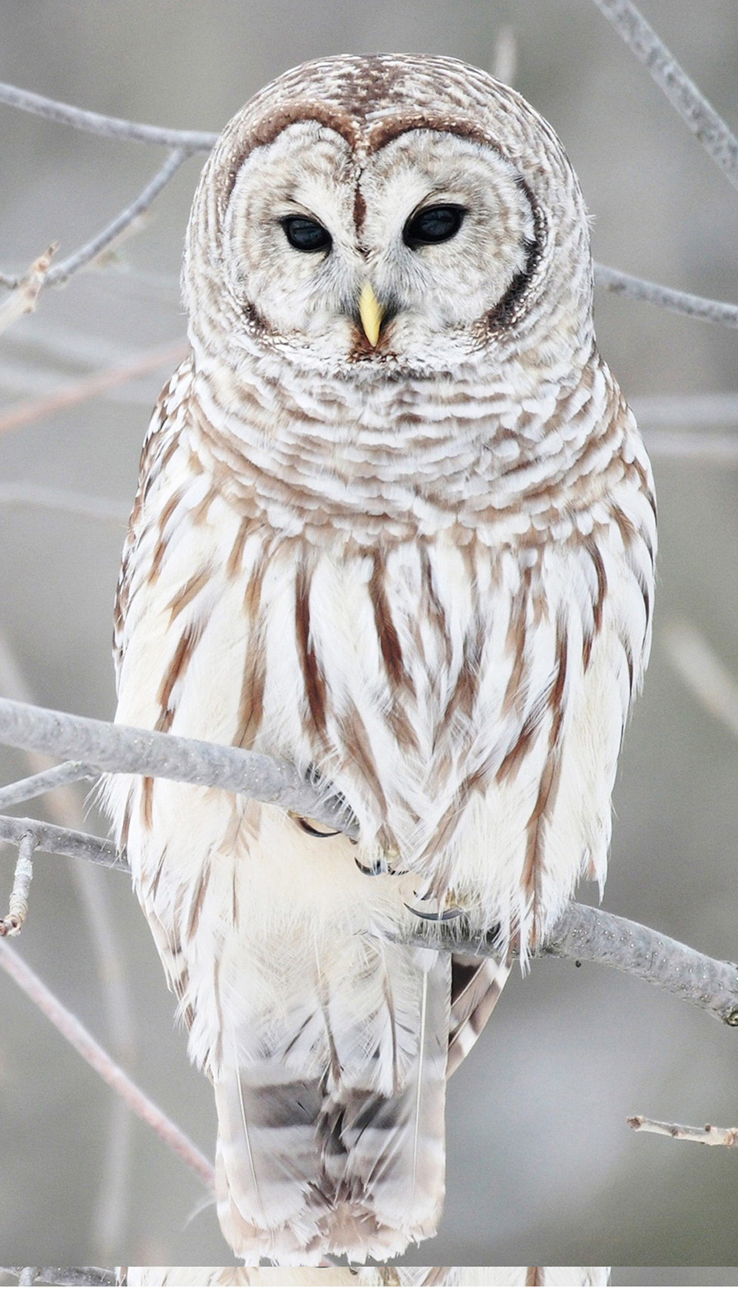Owl Wallpapers 77+ background pictures
