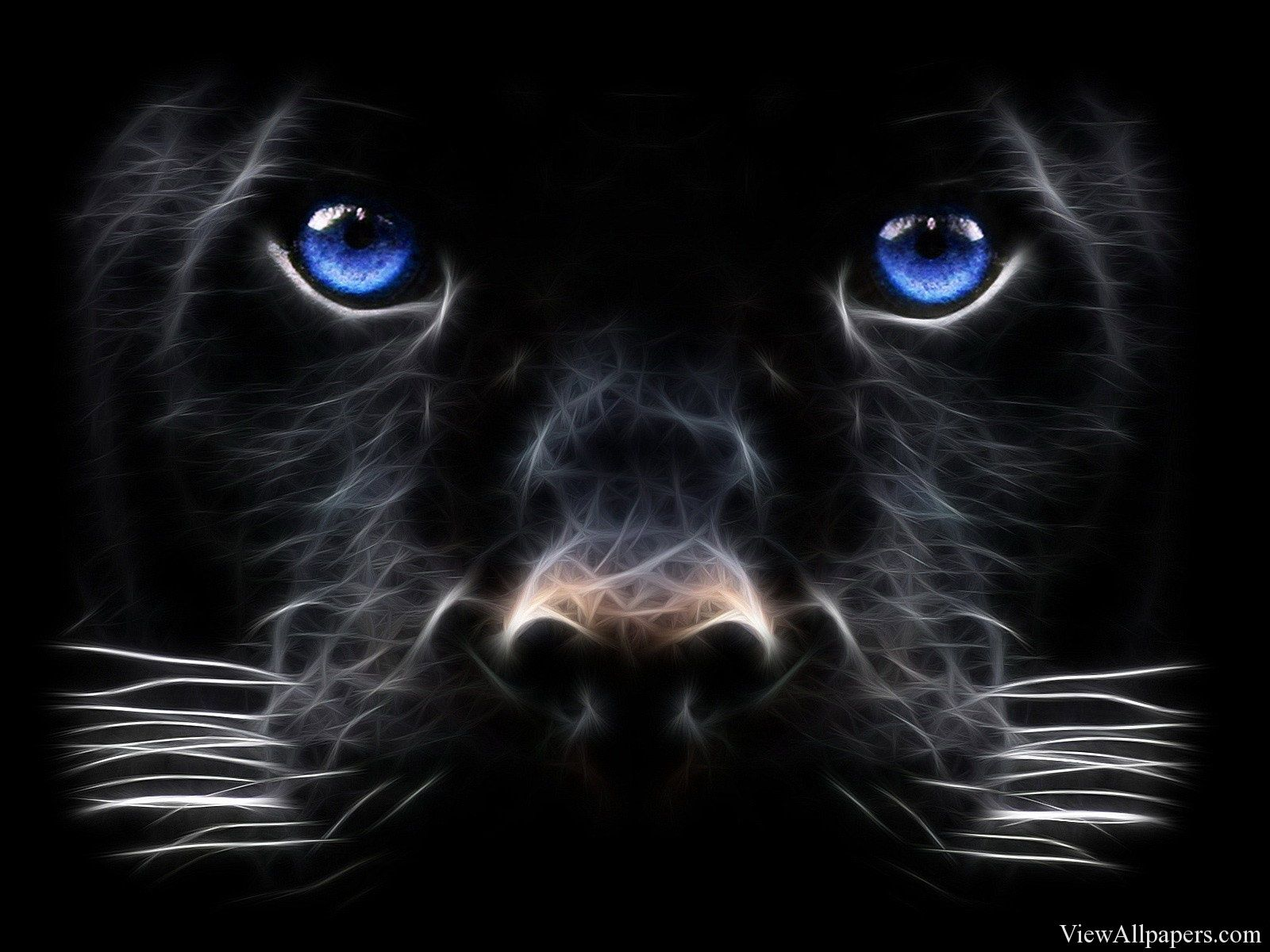 3D Black Tiger Blue Eyes 3D and Abstract HD Wallpapers in
