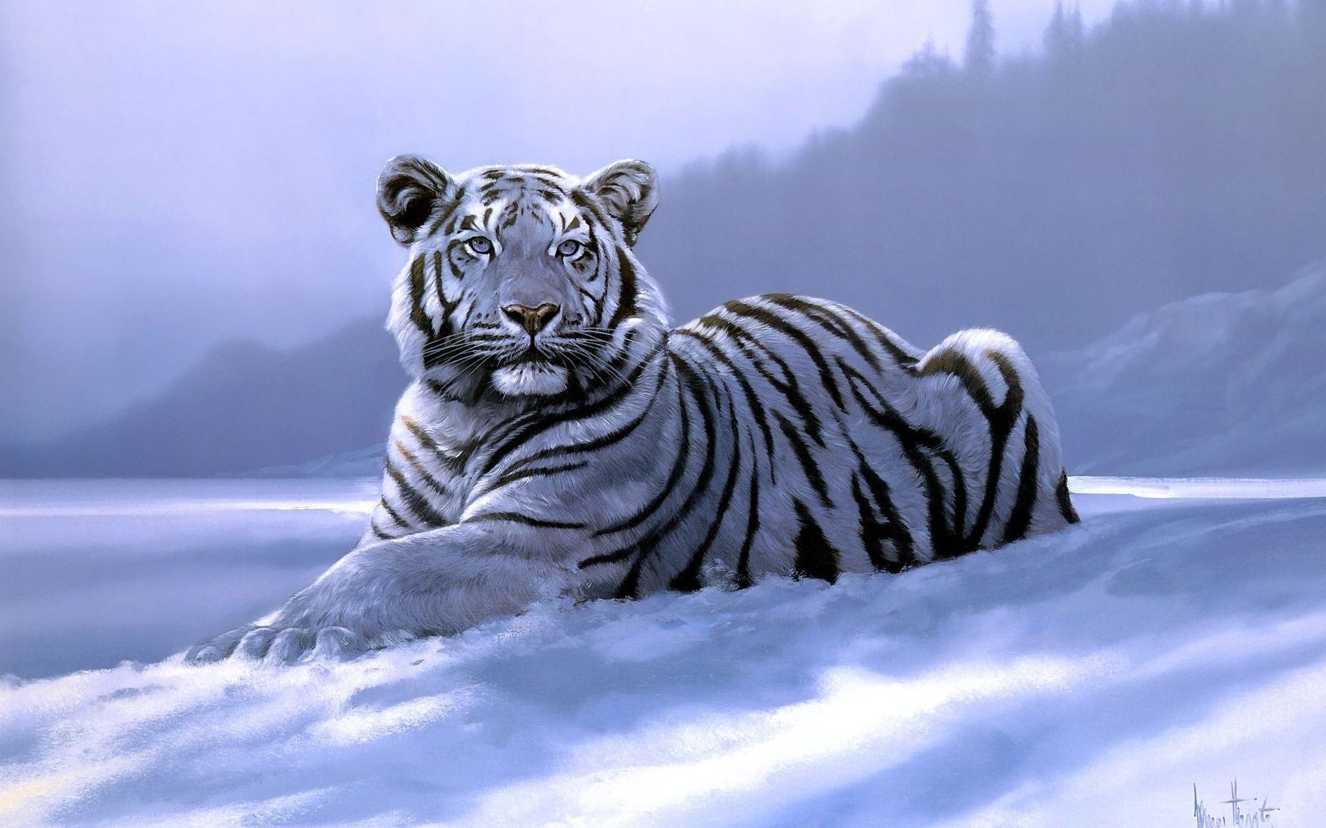 White Tiger HD Wallpaper Wallpapers Browse