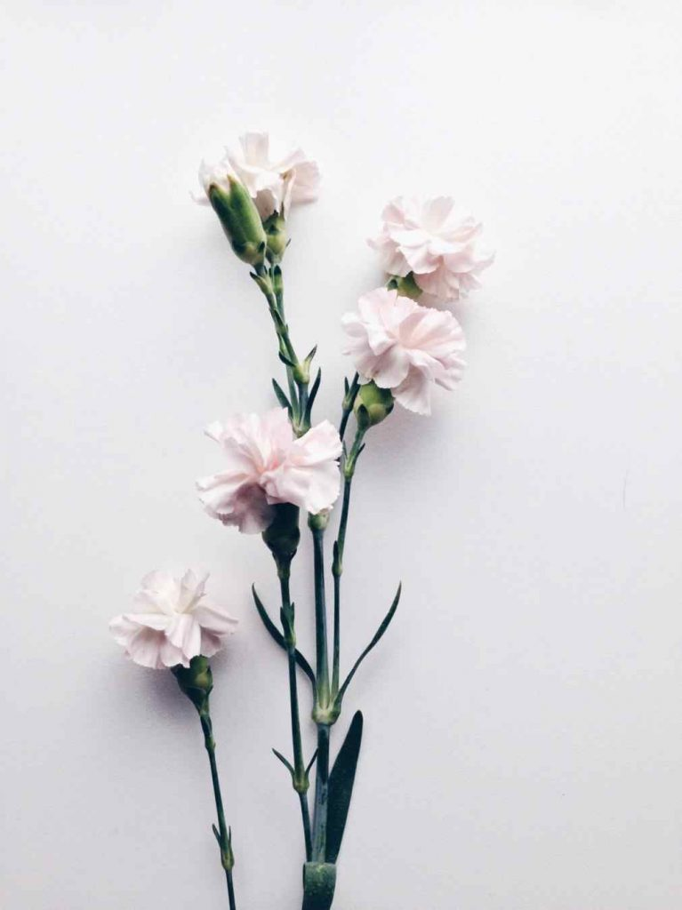 White Tumblr Wallpaper Posted By Michelle Anderson