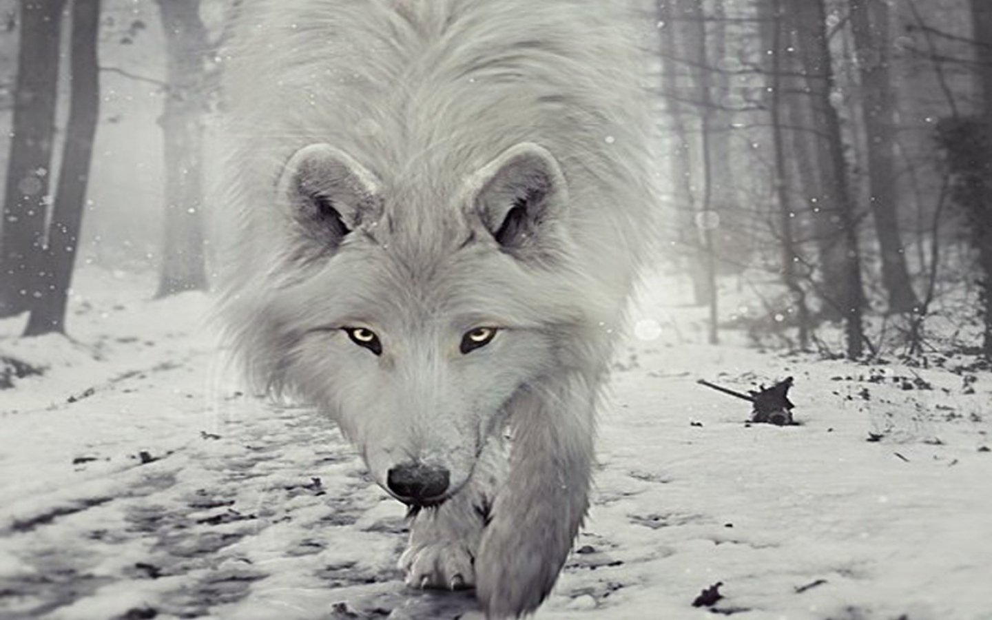 White Wolf Hd Posted By Zoey Anderson
