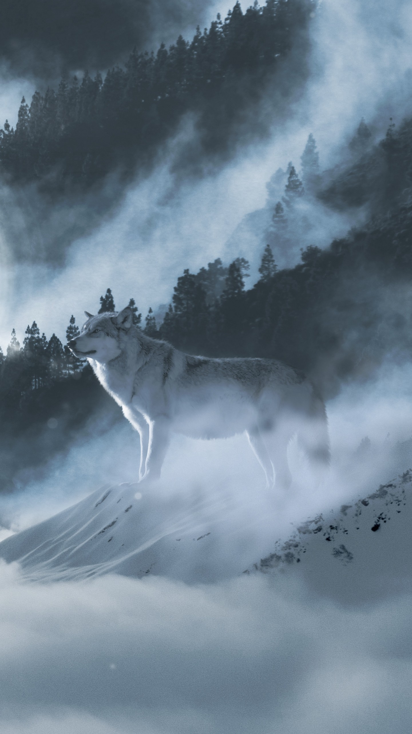 White Wolf Wallpaper Posted By Ryan Johnson