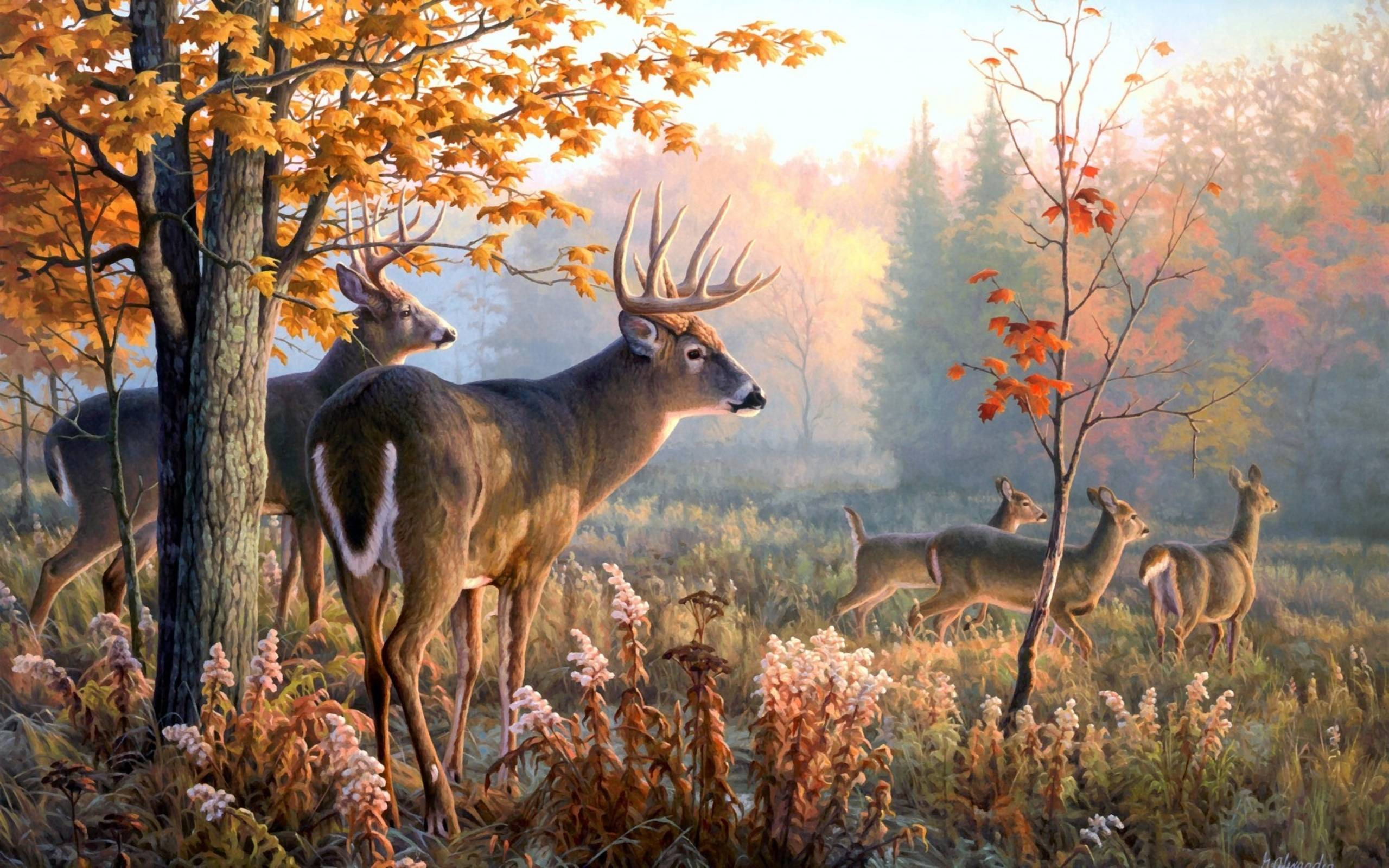 Whitetail Deer Screensaver Posted By Christopher Tremblay