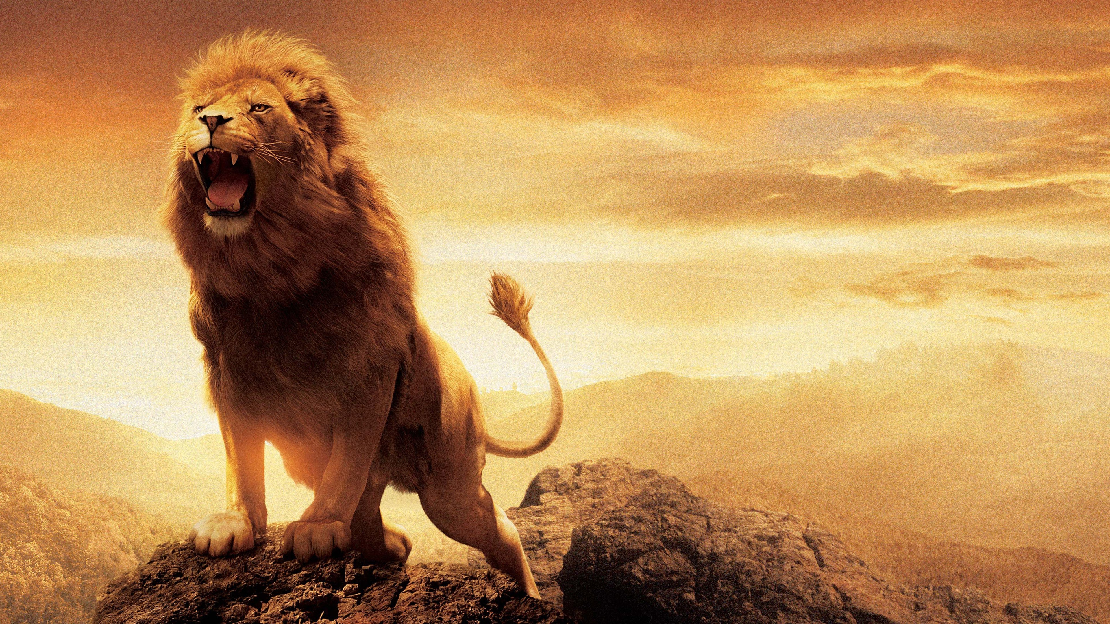 24+ Full Hd Wild Animals Wallpapers Wallpapers