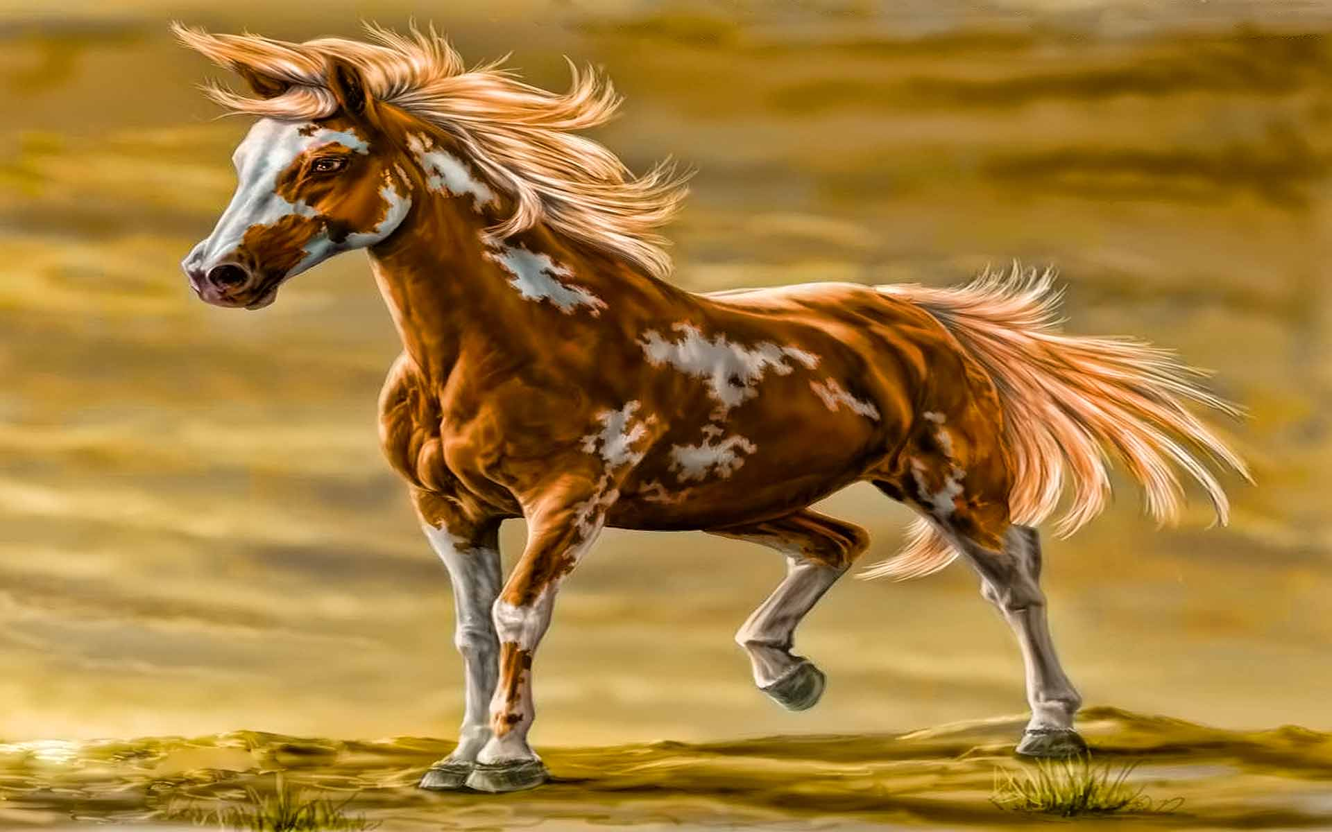 Wild Horse Backgrounds Posted By Zoey Anderson