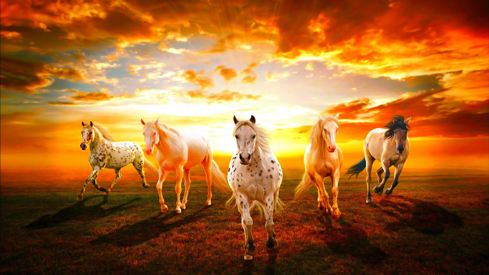 Wild Horse Wallpapers Posted By Ryan Peltier