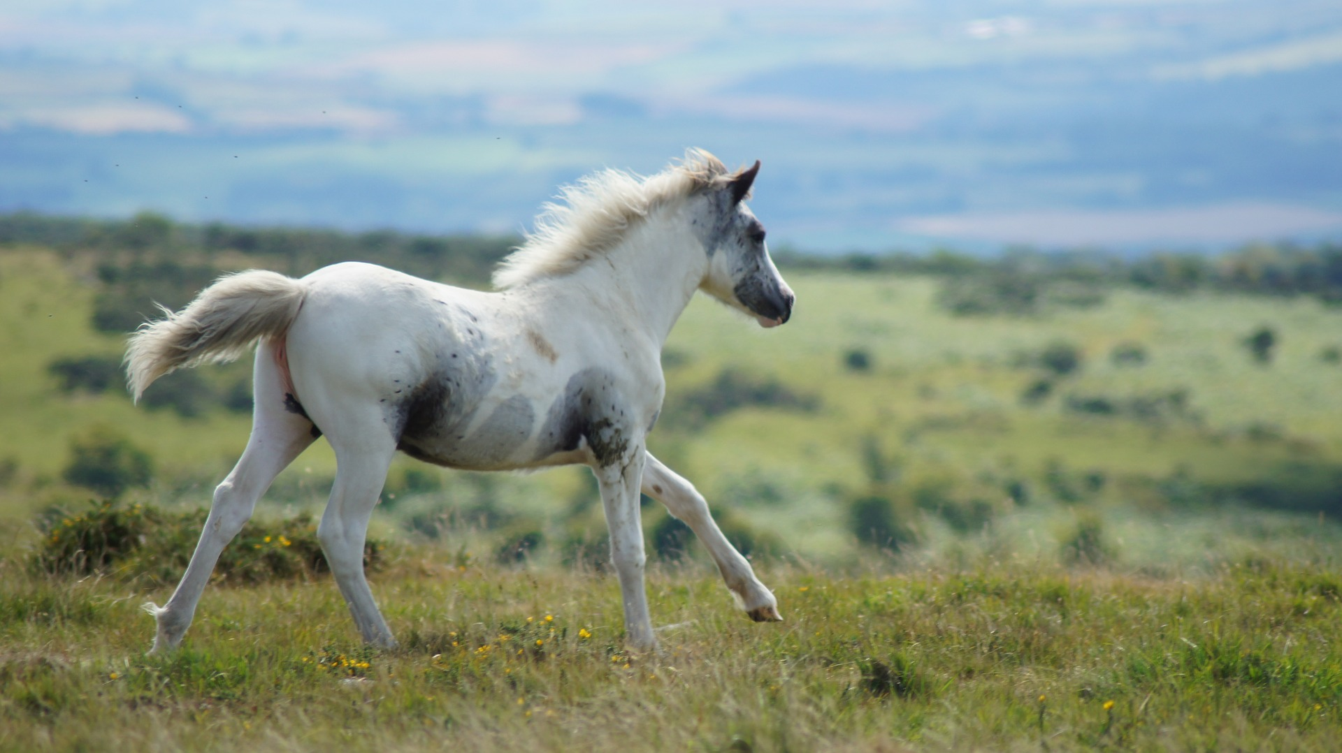 Wild Horses Wallpaper Posted By Sarah Mercado