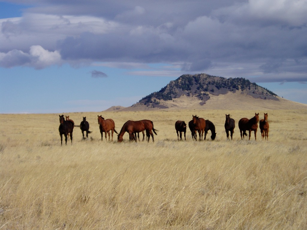 Wild Horses Wallpapers Posted By Zoey Simpson