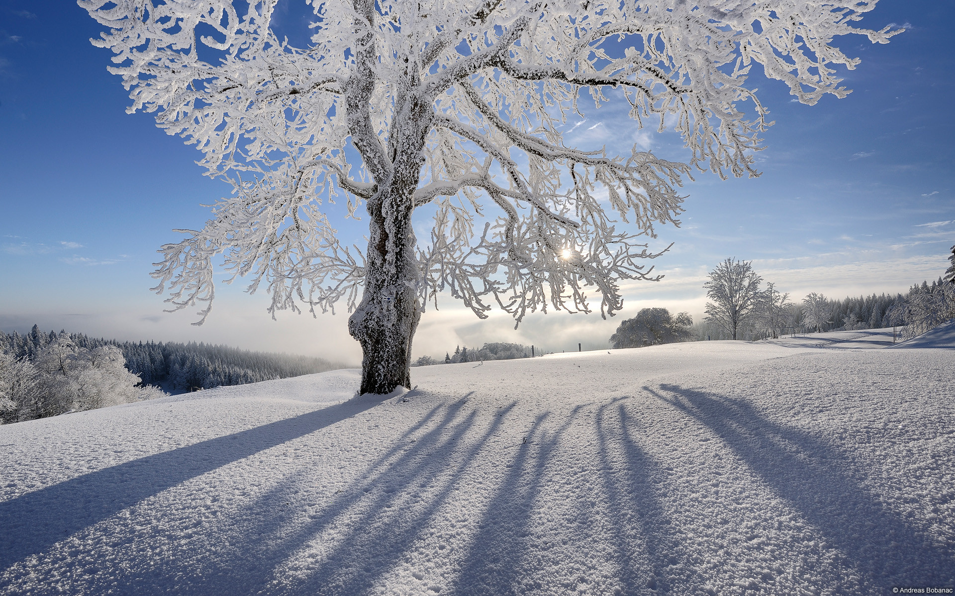 Winter Scenes Desktop Backgrounds Posted By Christopher Simpson