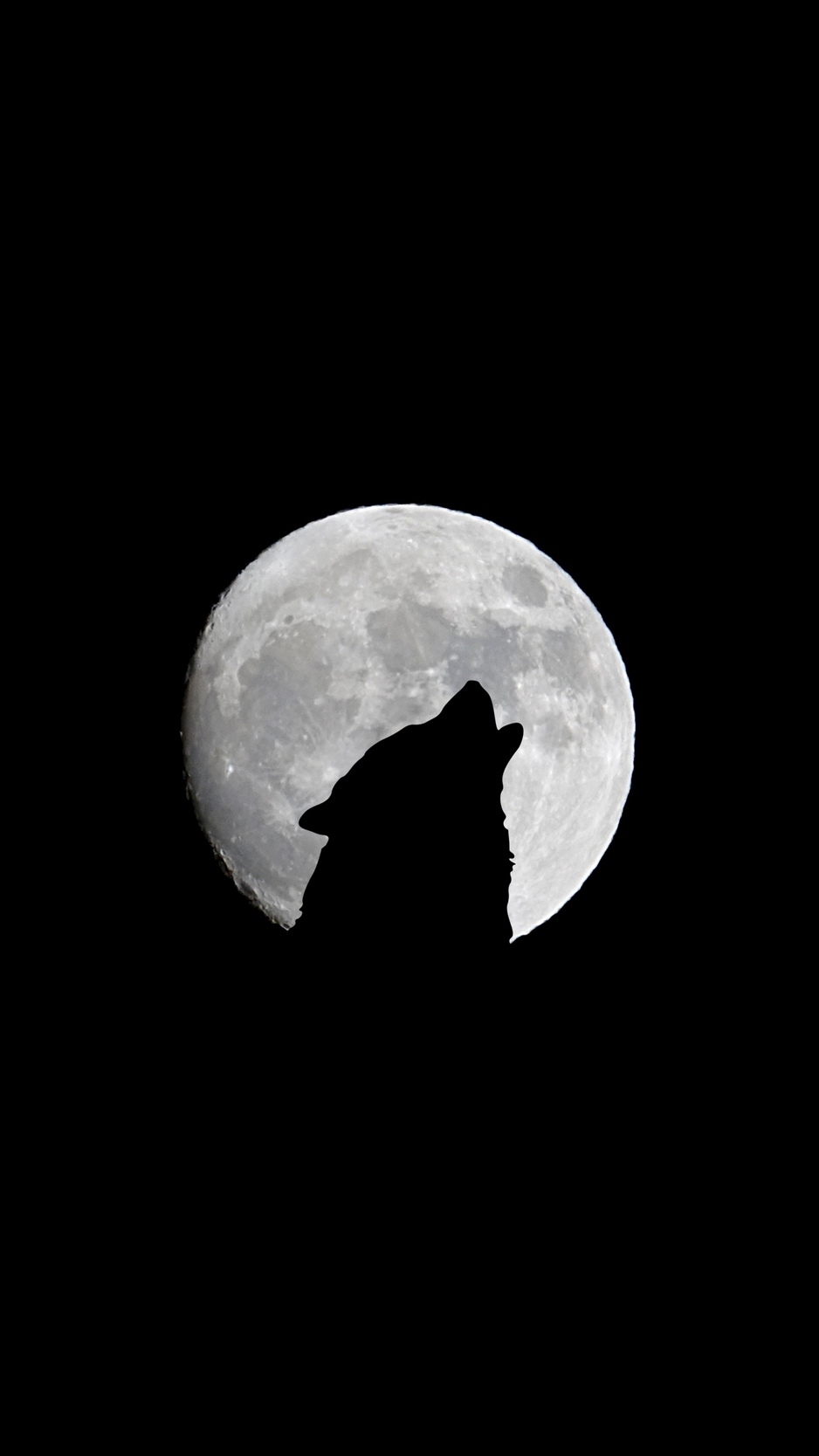 Wolf Backgrounds Iphone Posted By Samantha Peltier