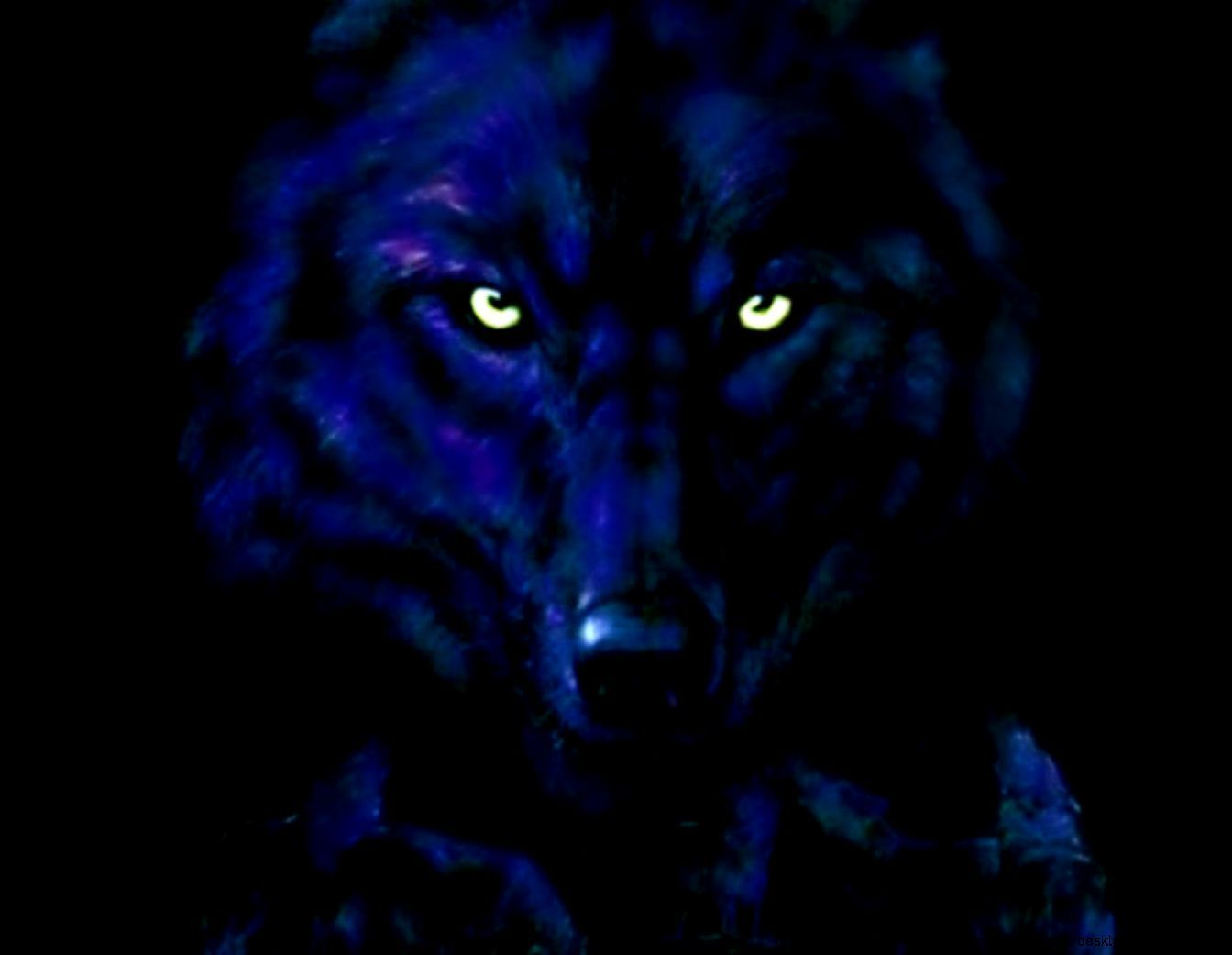 Wolf Face Wallpapers Posted By Christopher Johnson