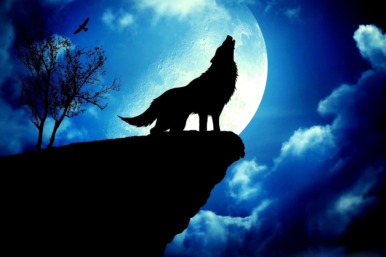 Galaxy Silhouette Wolf