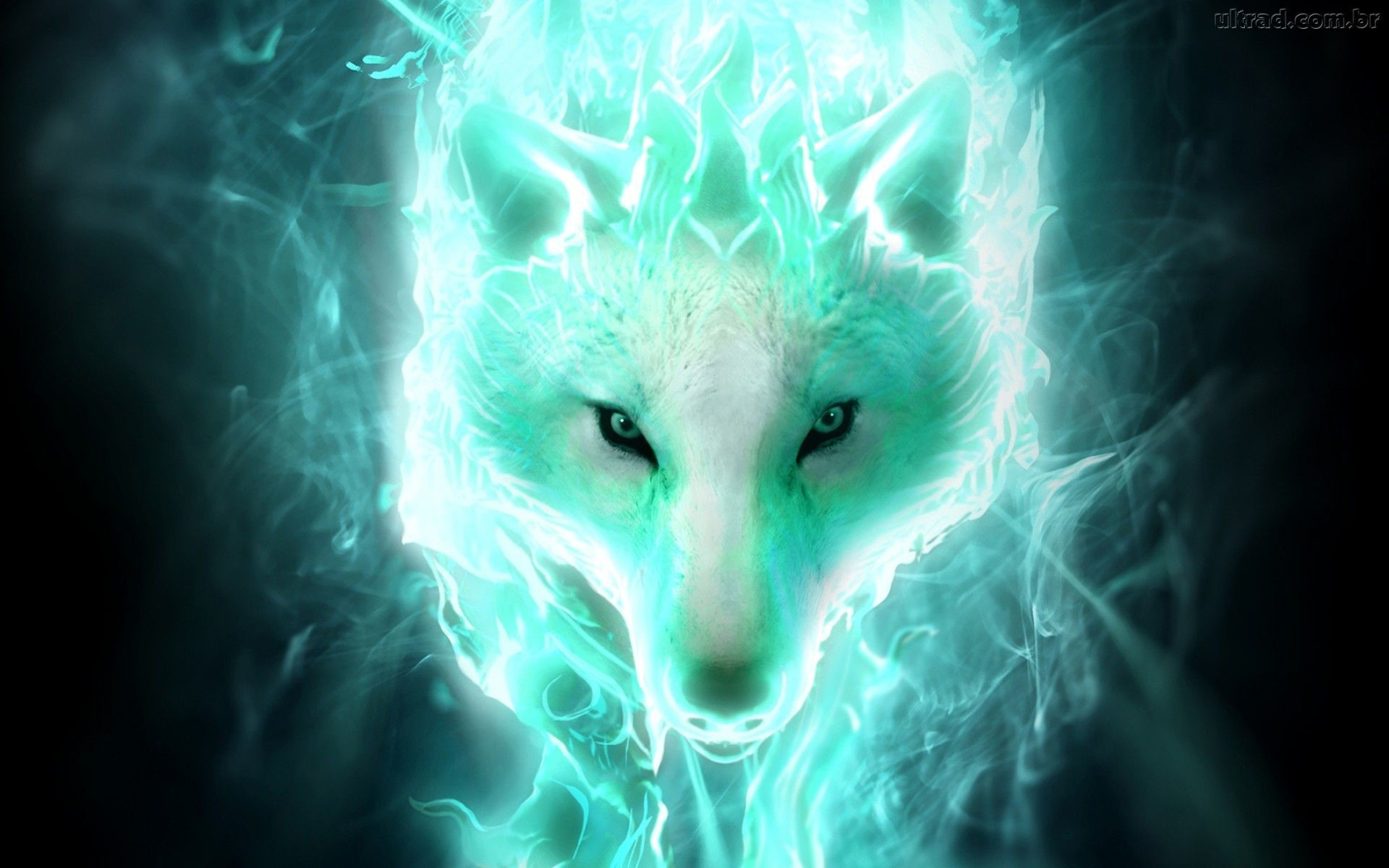 Wolf Wallpapers 80+ pictures