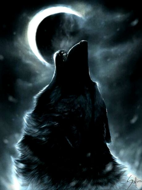 Wolf Howling At The Moon Wallpaper Wallpapers Design