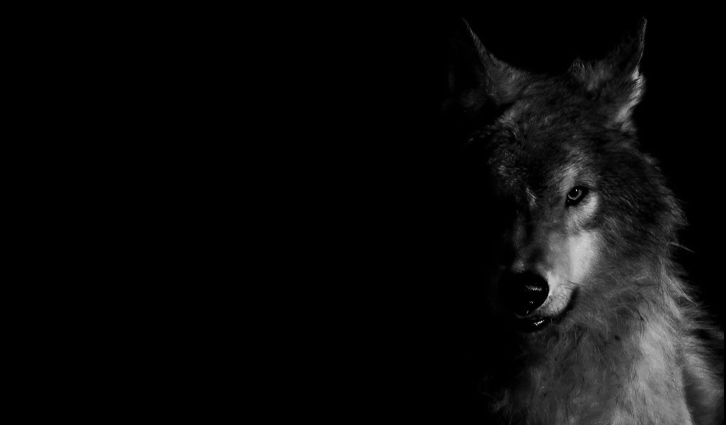Wallpaper Wolf 29+ images on Genchi.info