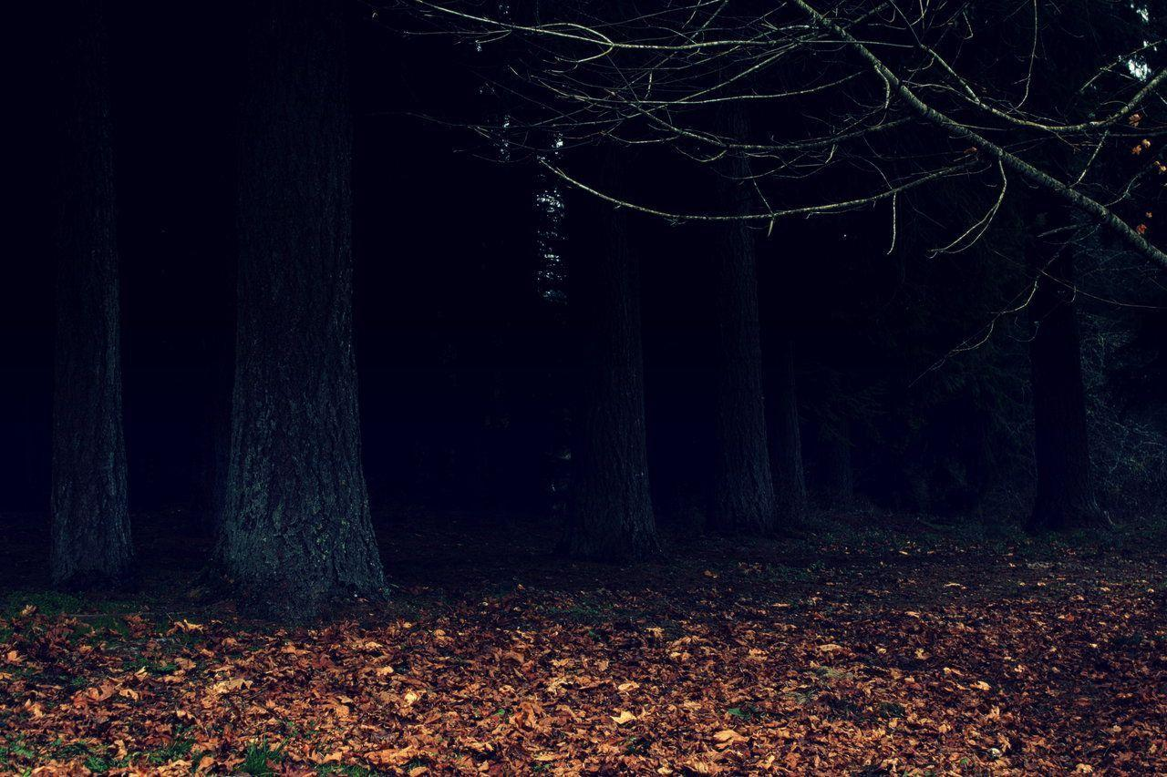 Woods At Night Wallpaper Posted By Ryan Walker