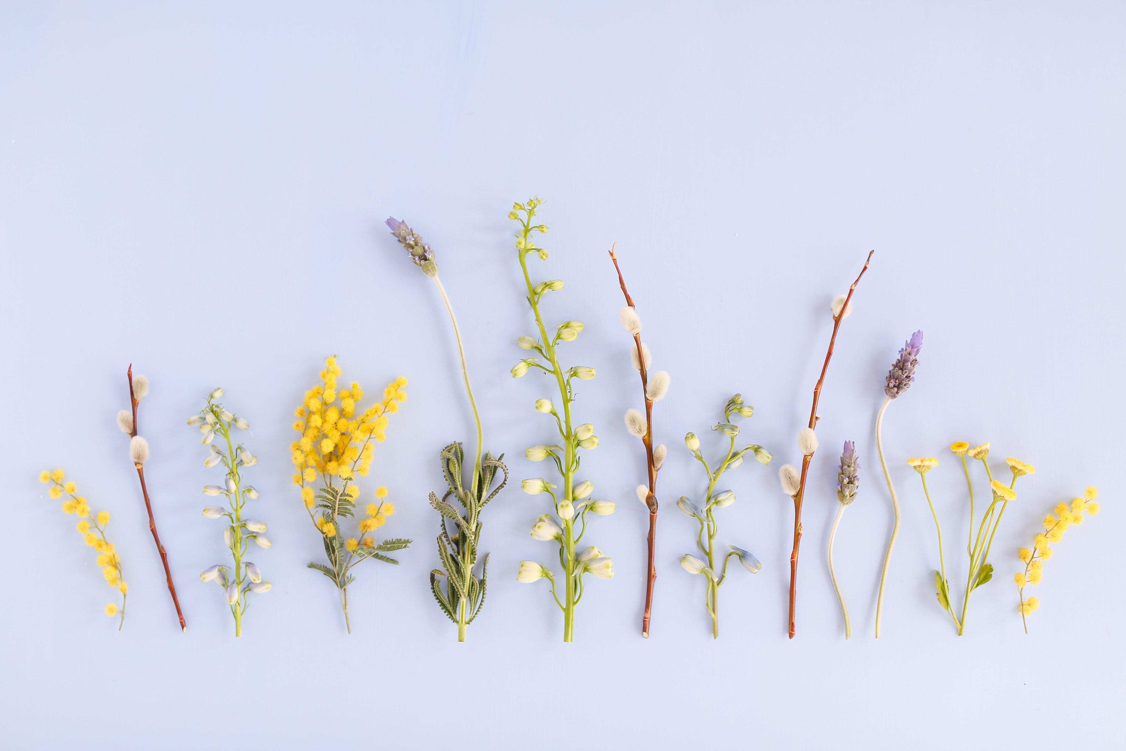 Digital Blooms May 2018 Yellow Desktop Wallpaper Aesthetic