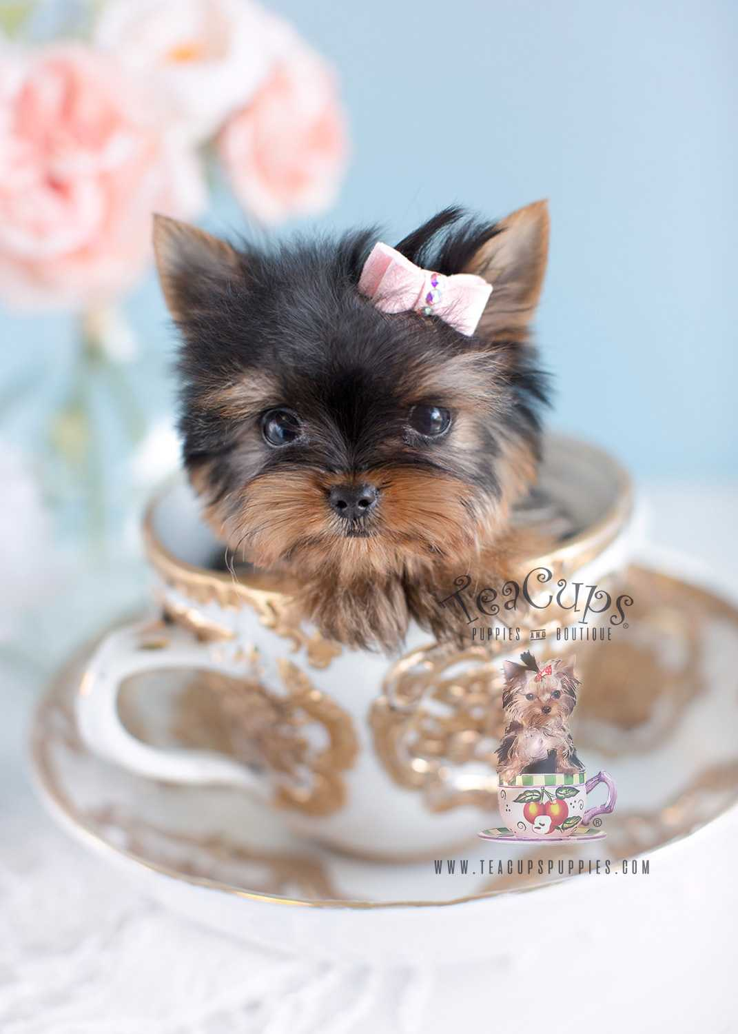 Yorkie Puppy Wallpaper Posted By Samantha Cunningham