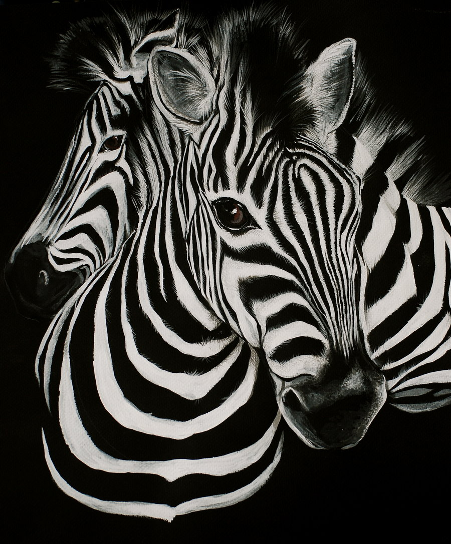 Zebras Wallpapers Posted By Samantha Peltier
